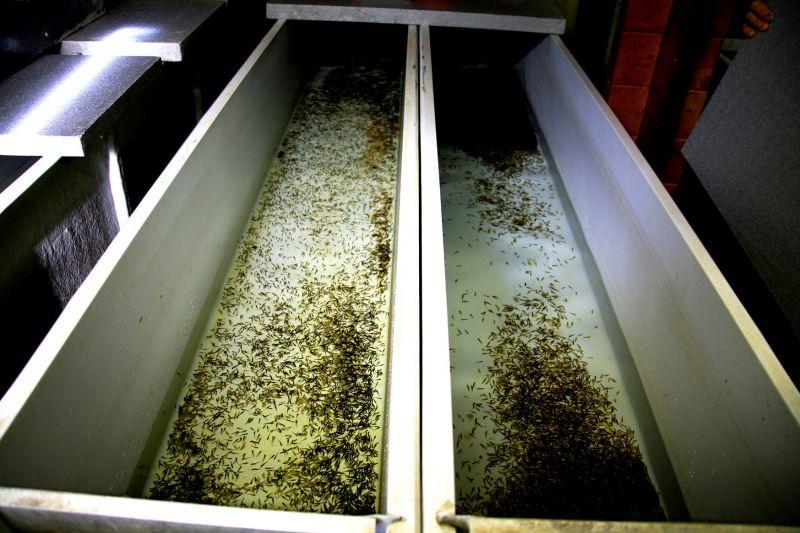 Visita guidata i giardini dell 39 acqua troticoltura for Vasche per allevamento trote